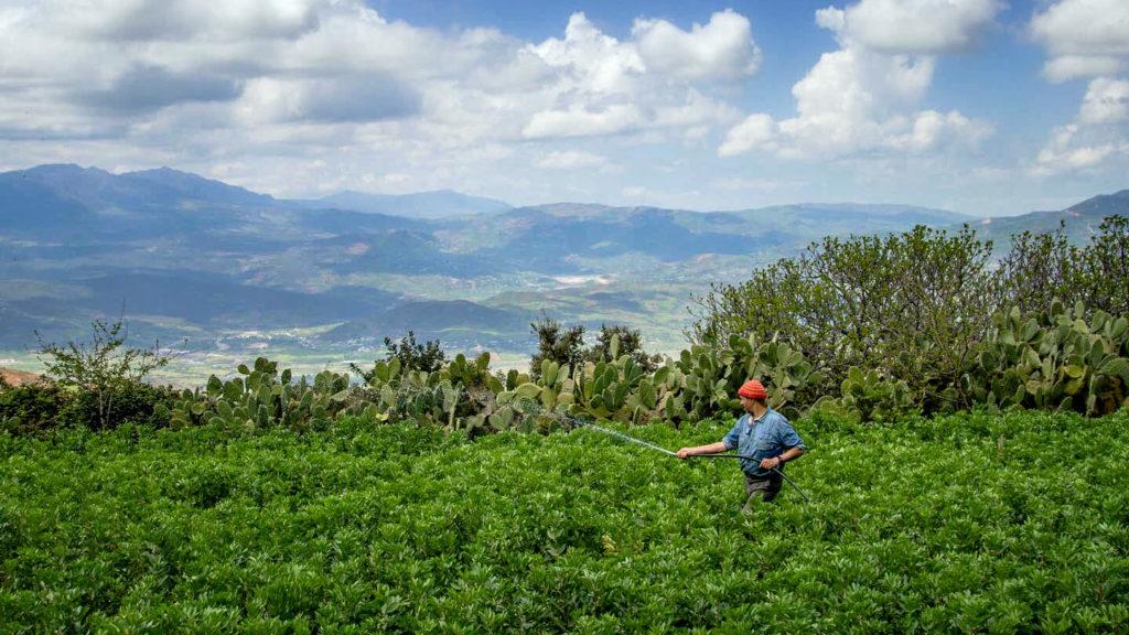ahmed-ayad-sommet-naturel-el-kalaa-maroc- agriculture-bio