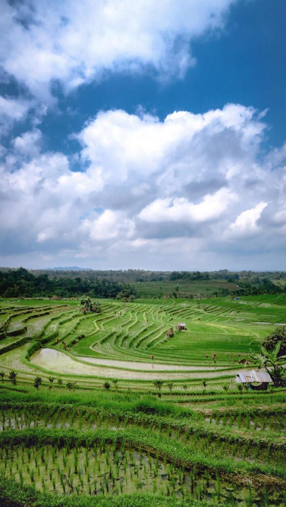 Rizières de Jatiluwih à Bali et somptueux ciel de nuages sur fond bleu