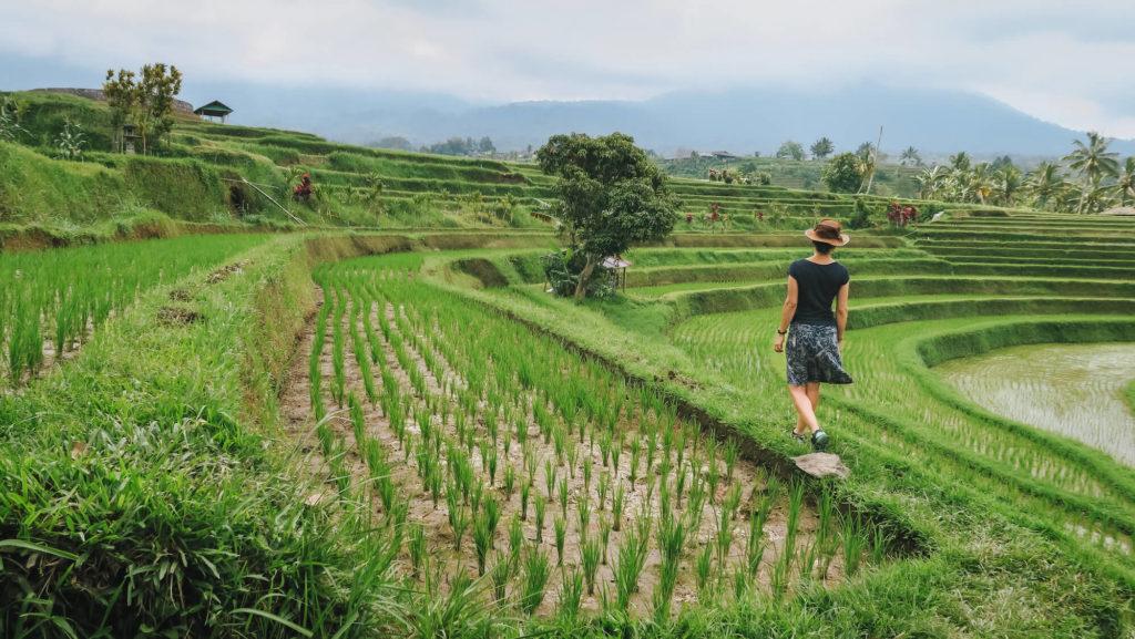 Promenade solitaire avec chapeau dans les rizières de Jatiluwih à Bali