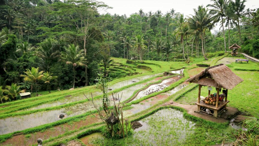 Le paradis vert des rizières de Tegalalang à Bali