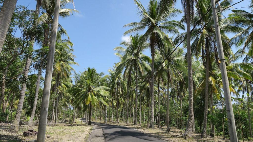 Les palmiers de Crystal Bay sur l'île de Nusa Penida, à Bali
