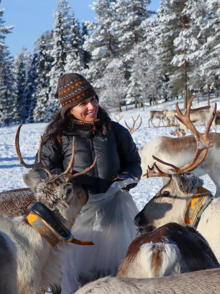 Aude nourrit les rennes en Laponie
