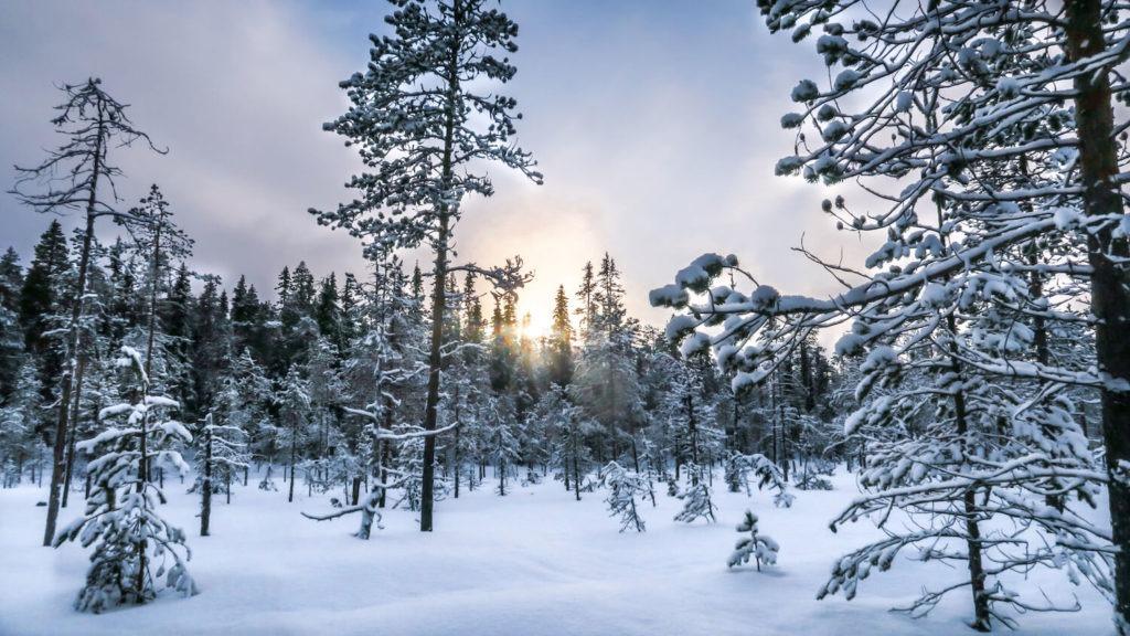 Paysage neigeux de Laponie