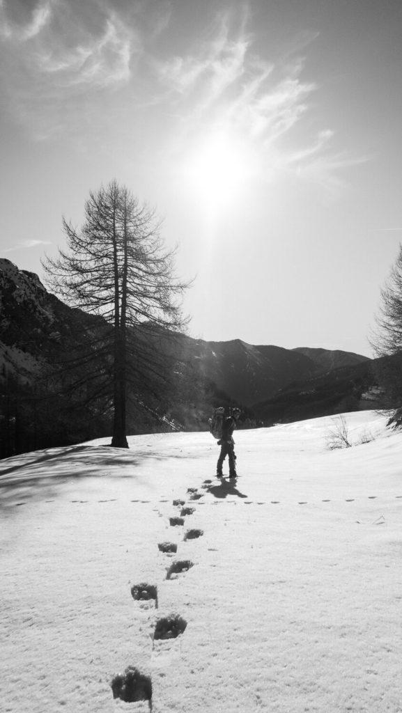 Homme en sac à dos en randonnée en raquettes, mélèze et paysage de neige
