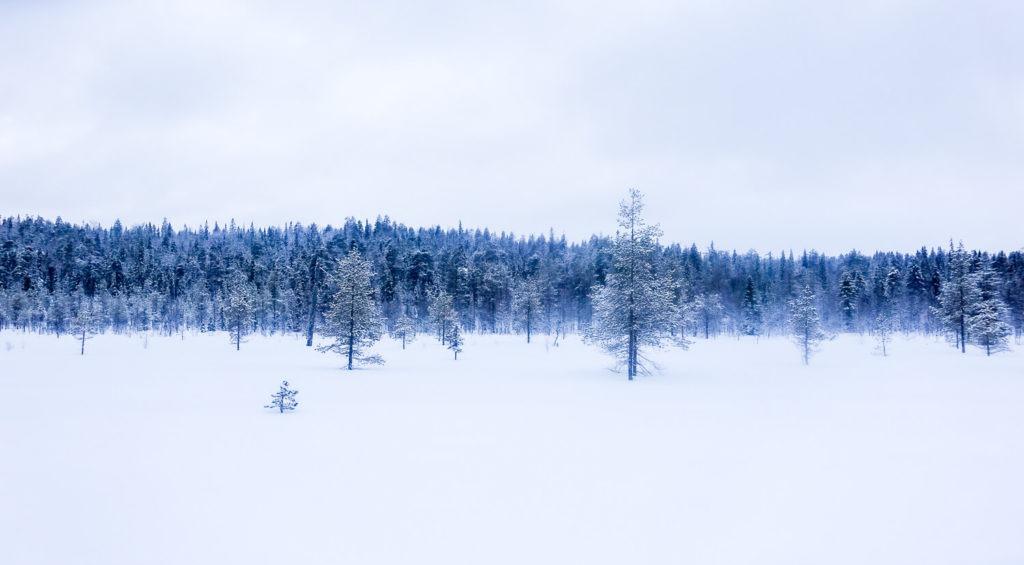Lumières bleutées sur la forêt du parc national d'Oulanka