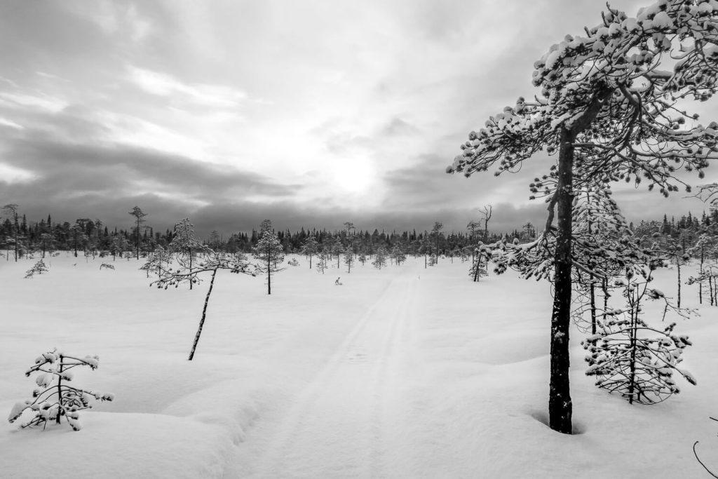 Chemin sur la neige à travers une étendue de forêt clairsemée
