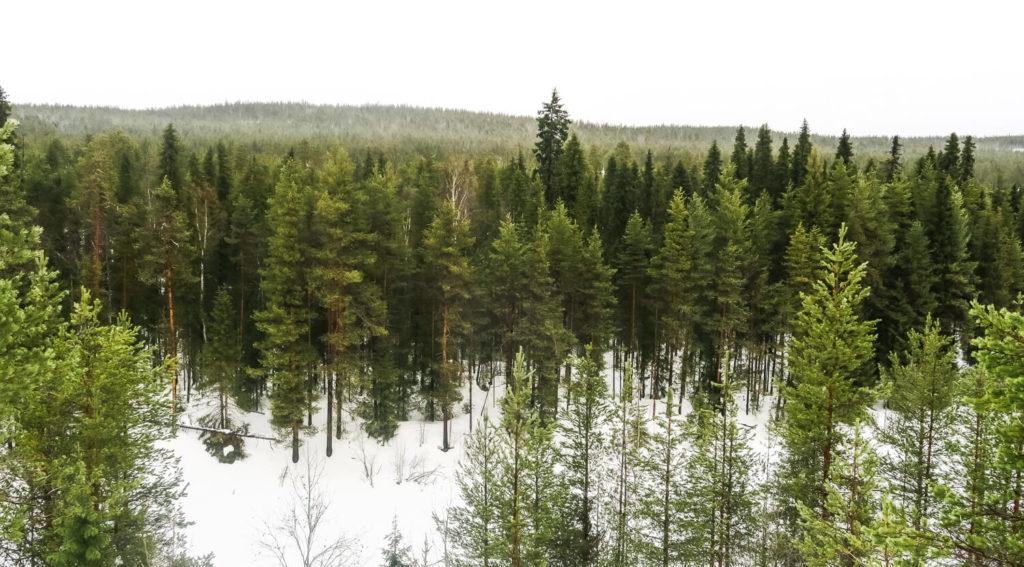 Rivière Oulanka en Laponie Finlandaise et forêt de conifère dense