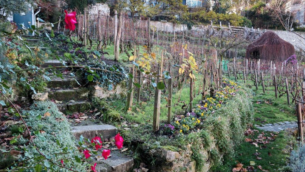Jardin et vignes à Montmatre, Paris