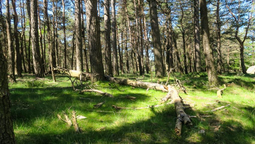 Forêt sur le plateau du Caroux