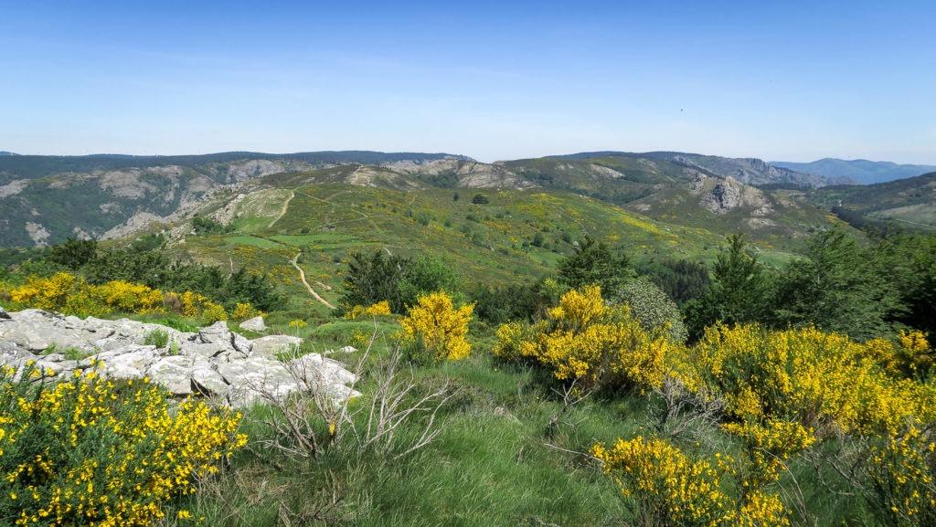 Vue du plateau du Caroux avec sa lande et ses genêts en fleurs