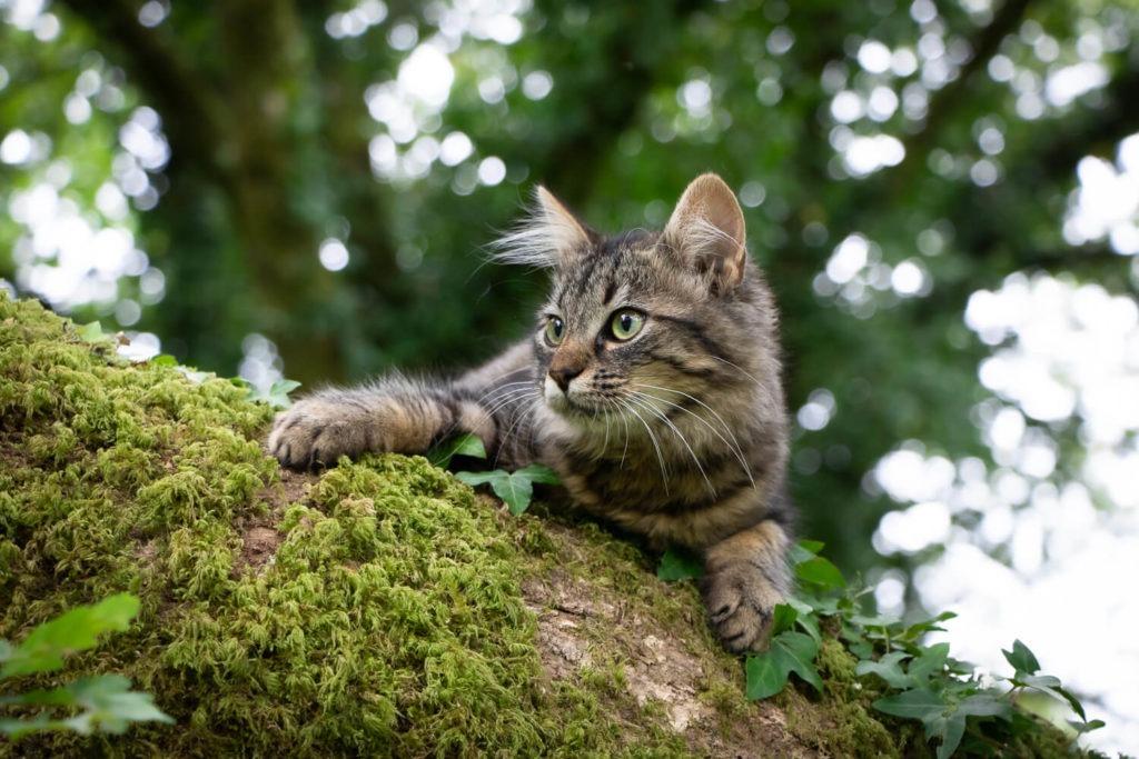 Chat à l'affût dans un arbre