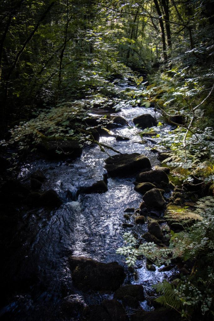 Rivière d'Argent dans la forêt d'Huelgoat