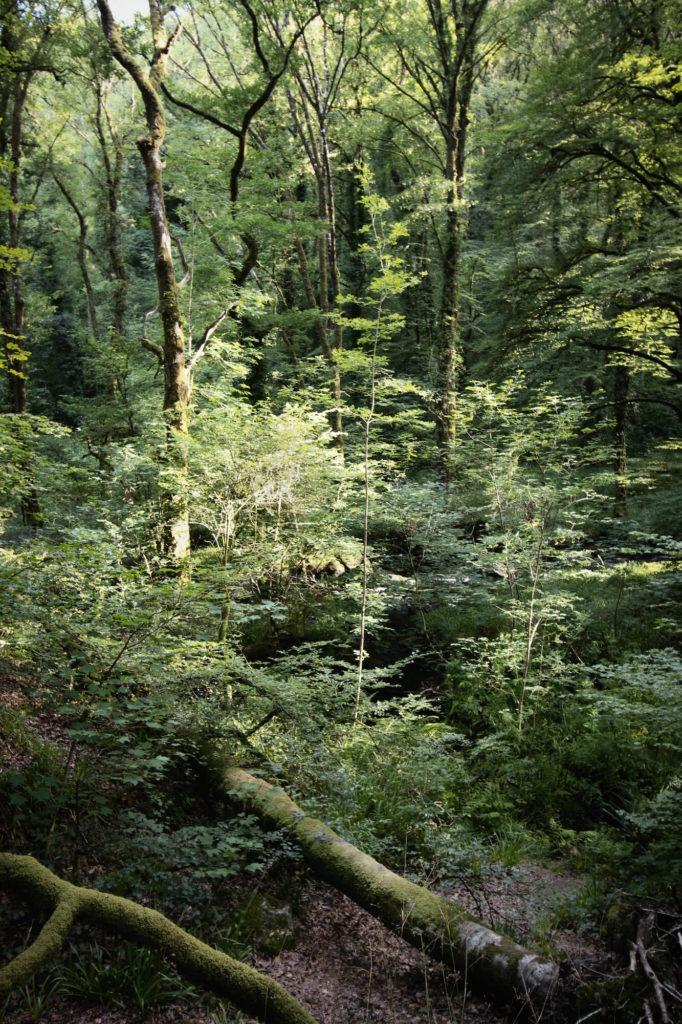 Futaie irrégulière mixte dans la forêt d'Huelgoat