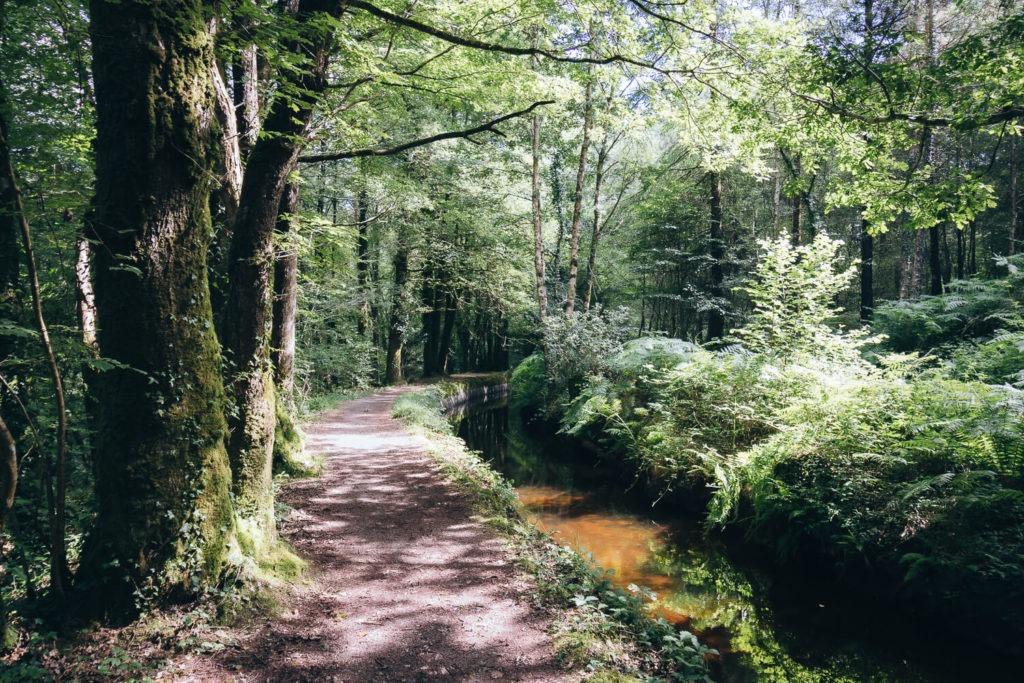 Sentier et arbres au bord du canal de la forêt d'Huelgoat