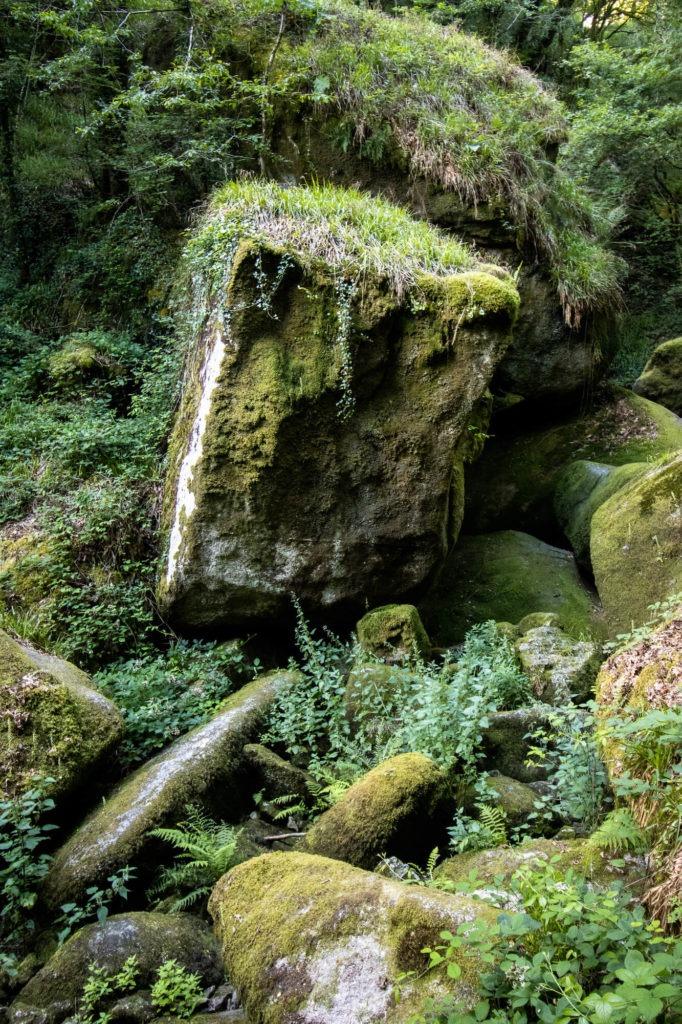 Amas de roches et fougères dans la forêt de Huelgoat