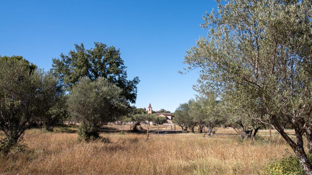 Champ d'oliviers et église de Sillans-la-Cascade au loin